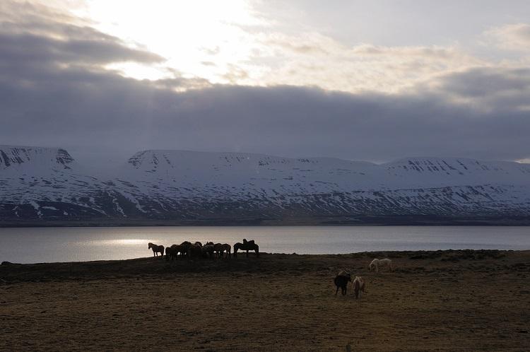 Akureyri_Svalbarðseyri